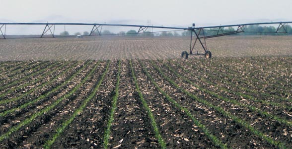 A center pivot in southeast Nebraska delivers water to young corn plants on May 17.