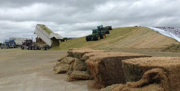 Pushing silage in Indiana