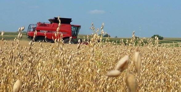 Jim Stoutenboro harvesting oats in Central Illinois