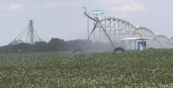 Pivot irrigated soybeans near Hampton, Nebraska