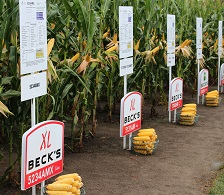 Becknology Days_corn_plot_web