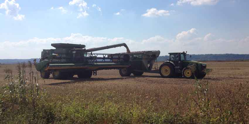 h2014-illinois-soybean-harvest