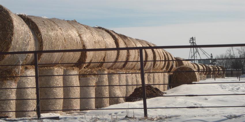 round bales in snow feb 2011