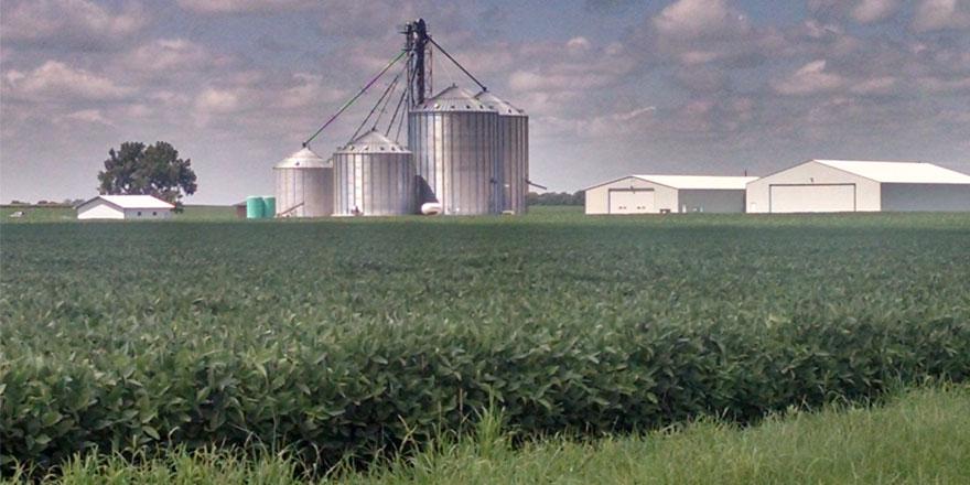072315-Soybean-field-near-F
