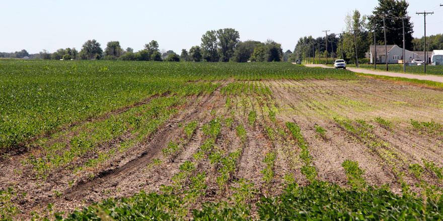 073115-A-soybean-field-cont