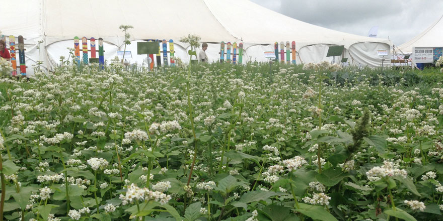 082615-Cover-crop-plot-and-