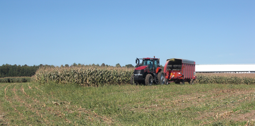 chopping corn silage at the U.W. Ag Research Station at Marshfield, Wisconsin.