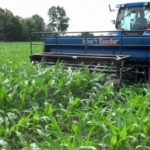 Early season interseeding of cover crops