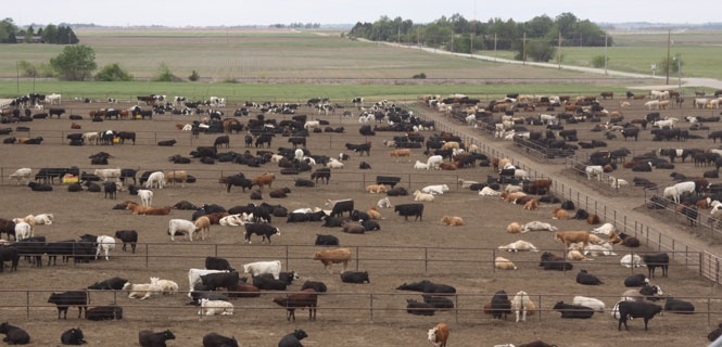 Green Plains To Acquire Cattle Feed Yards From Cargill   Brownfield Ag News