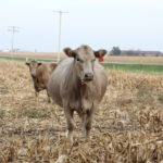 Global beef trends: Spotlight is on China