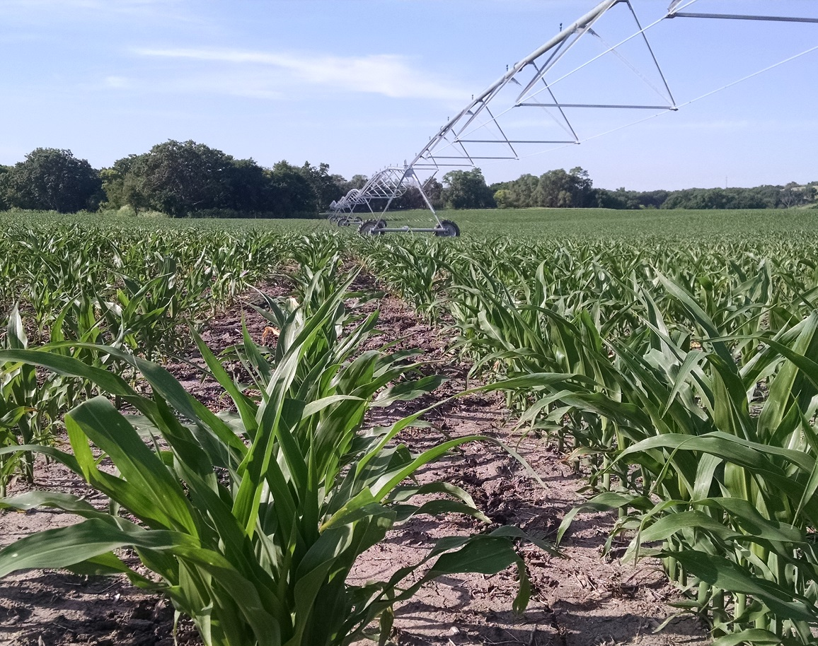 Nebraska corn rated 78% good to excellent; beans 74% ...